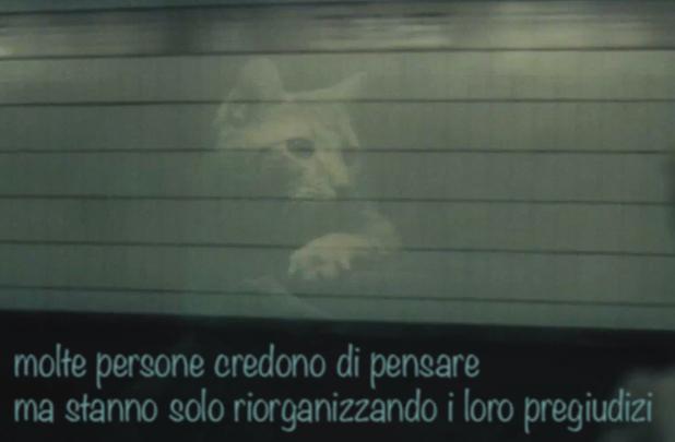 aforismi per gatti vol. II